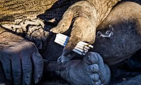 amou haji 80 year old iranian man smokes animal says he