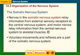 chapter 33 nervous system ppt video online download