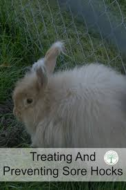 Air Conditioned Rabbit Hutch 136 Best Hsh Rabbits Images On Pinterest Raising Rabbits
