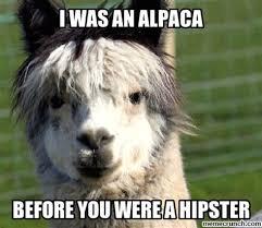 Alpaca Sheep Meme - th id oip l3czjeq5hvko3xtefl9yuwhagb