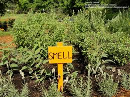 Gardening Ideas For Children Picardo Children S Garden Idea Smell Garden A Twist On A