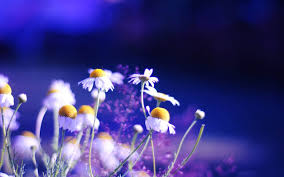 Nice Flowers Nice Flowers Desktop Backgrounds Pretty Flower Pictures Hd