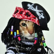 witch costume for cats a cat dressed in a pirate costume abc news australian