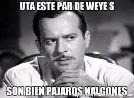 Memes De Nalgones - uta este par de weye s son bien pajaros nalgones meme de pedro
