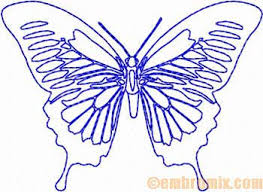 animals insects papilio ulysses butterfly embroidery