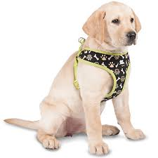 dog ribbon coastal pet attire ribbon overlay harness leash harnesses