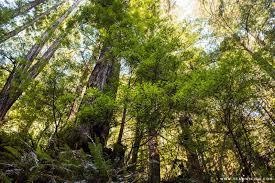 fern at van damme state park hej a california