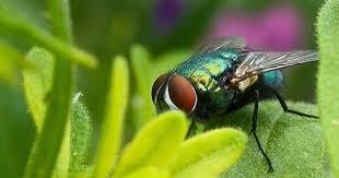 chasser les moucherons dans la cuisine 13 astuces naturelles pour chasser les mouches définitivement