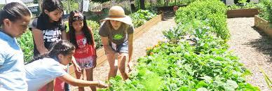 Urban Garden Los Angeles Inspiring Urban Farm Teaches Kids How To Grow Their Own Organic