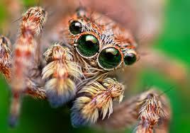 Spider Meme Misunderstood Spider Meme - misunderstood spider meme bed