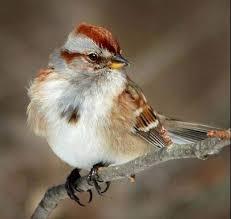 Audubon Backyard Bird Count by Help Us Hit 100 000 In The Great Backyard Bird Count Birds And