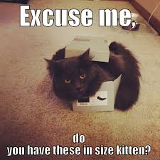 Black Box Meme - pin by staceymarie cbrs on cute cats pinterest crazy cat lady