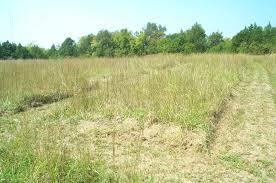 native plant restoration blackland prairie restoration