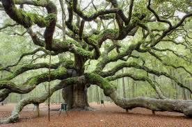 13 most beautiful and popular trees around the world