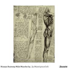 Human Anatomy Male Human Anatomy Male Muscles By Leonardo Da Vinci Poster Raf Ikbl