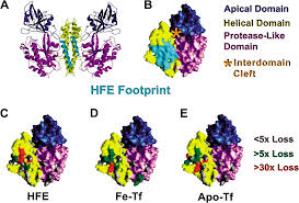 plos biology mechanism for multiple ligand recognition by the