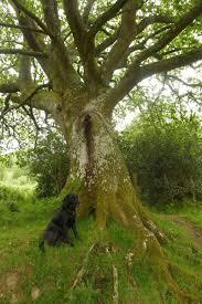 trees myth moor