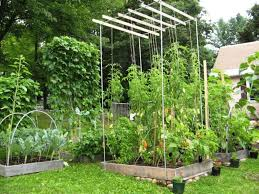 tomato trellis ideas 5 terrific tomato trellis ideas for easier