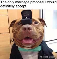 Meme Marriage Proposal - dopl3r com memes the only marriage proposal i would definitely