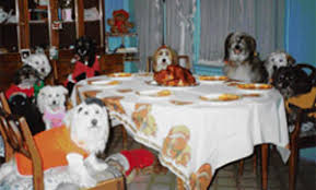 dogs at dinner table forum čestitke duke iz porodice daniela pas tjedna 01 07 01