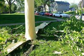 tree stripped of bark by lightning in dubuque iowa photo huffpost