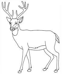 deer coloring page chuckbutt com