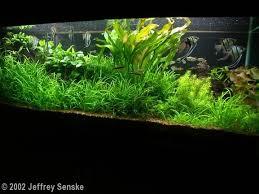 Aga Aquascaping Contest 428 Best Aquarium Images On Pinterest Aquascaping Fish Tanks