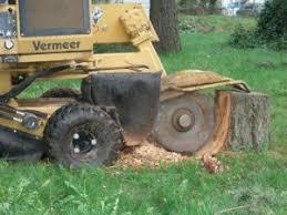 stump grinder rental near me stump grinders premium tree service