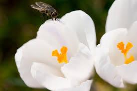 petites mouches cuisine se débarrasser des mouches et moucherons