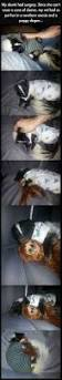 best 25 skunk removal ideas on pinterest urine stains pet