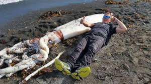 Meters To Feet by Photos Giant Squid With Tentacles Over 16 Feet Long Washes Up On