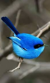 423 best birds images on pinterest animals beautiful birds and