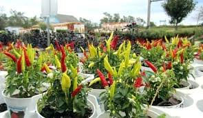 Container Vegetable Gardening Ideas Container Vegetable Garden Plans Container Vegetable Garden Ideas