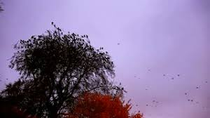 birds flying to tree tops scared birds stock footage