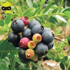 compare prices on edible ornamentals shopping buy low