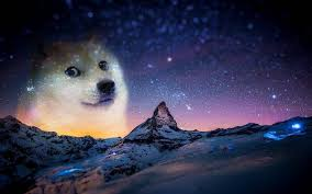 Meme Wallpapers - snow night animals doge memes wallpapers hd desktop and mobile