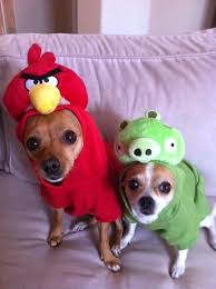 Chihuahua Halloween Costume 27 Halloween Dogs Images Dog Costumes Dog