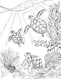three sea turtles coloring page mermaid coloring pages