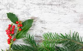 christmas plants in a wood background stock photo picture and