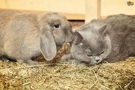 introducing cats and rabbits pets4homes