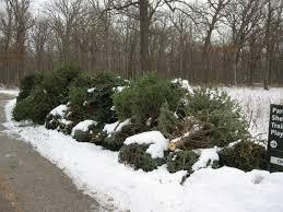100 chicago christmas tree disposal 2014 the bmo harris