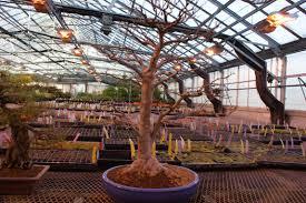 my chicago botanic garden tag archive bonsai