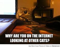 Cat Internet Meme - why are you on the internet cat meme cat planet cat planet