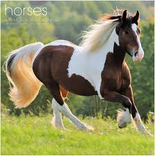 Are Horses Color Blind 20 Perfect Gifts For The Horse Crazy Kid U2013 Ihearthorses Com