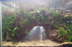 planted tank cave by ryan aquarium design contest aquascape awards