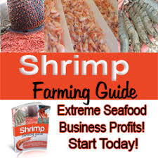 Backyard Shrimp Farming by Indoor Freshwater Shrimp Farming Business Guide Start A Shrimp Farm