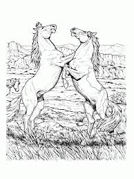 Coloriage cheval pour adulte  1001 Animaux