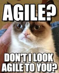 Agile Meme - agile grumpy cat meme on memegen