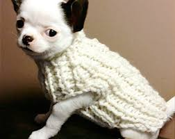 100 chihuahua sweater with trimmings with roses