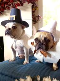 happy thanksgiving bulldog pilgrims buhi